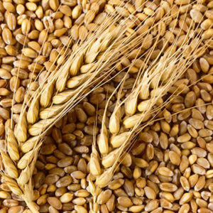 Skin Tightenner Complex-Wheat protein-1