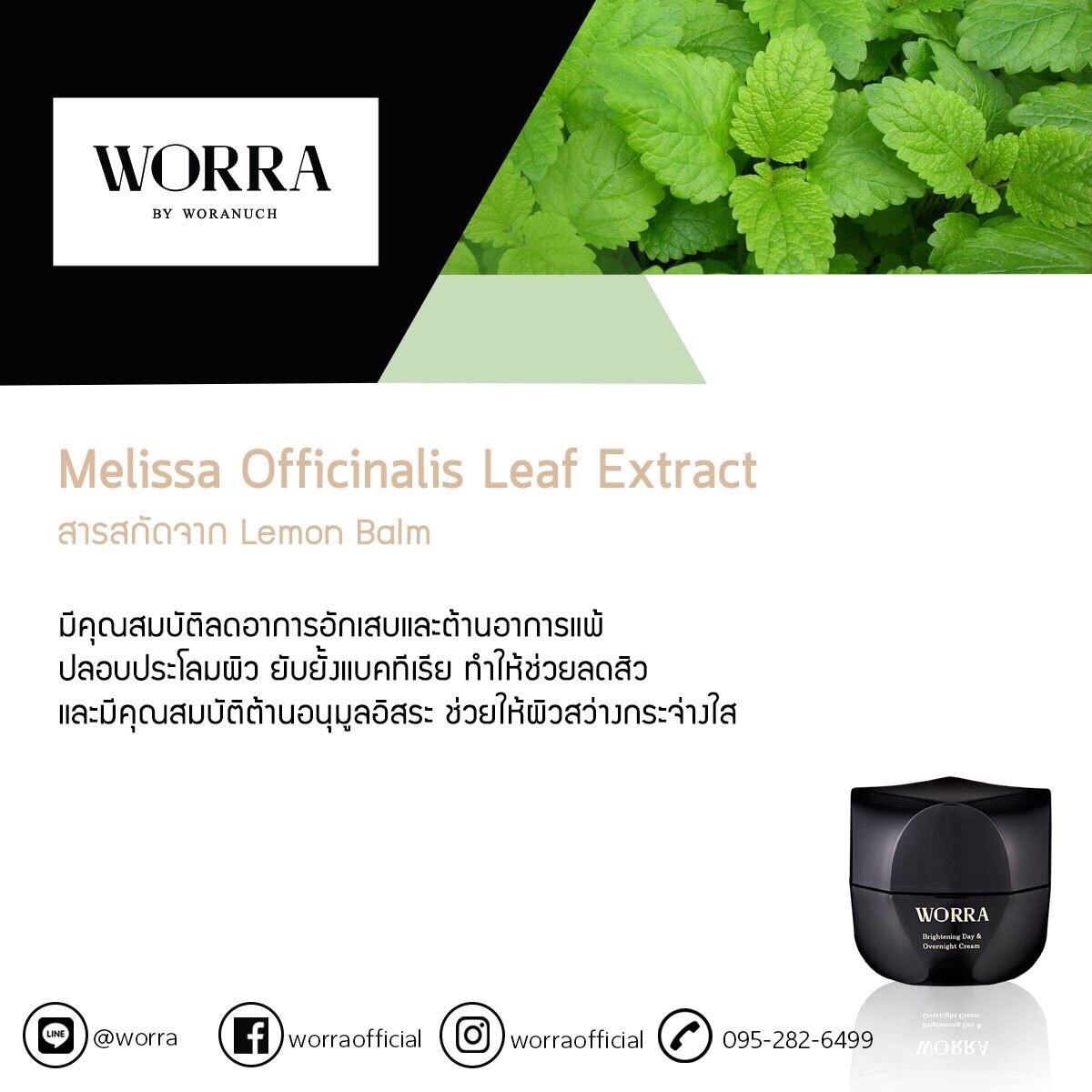 Melissa Officinalis Leaf